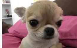 Gửi chó cưng cho mẹ trông, thanh niên hoảng hồn, khóc thầm trong lòng khi gặp lại con vật