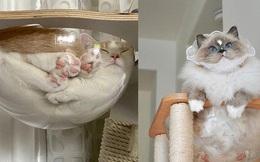 Mèo và bát thủy tinh chính là combo siêu cấp đáng yêu càng xem nhiều càng nghiện