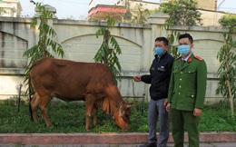 Đầu năm thuê xe tải từ Nghệ An sang Hà Tĩnh trộm trâu bò về bán