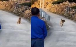 Xúc động khoảnh khắc chú chó già yếu từ biệt chủ trước khi rời nhà tìm nơi để... chết