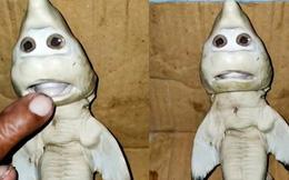 """Cá mập mang thai mắc lưới, ngư dân sững sờ khi nhìn thấy cảnh tượng trong bụng con vật còn dân mạng nghĩ ngay đến """"Baby Shark"""""""