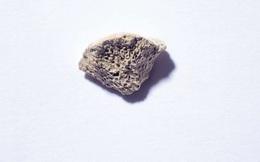 Mảnh xương 10.000 năm tuổi tiết lộ bí ẩn gây sốc