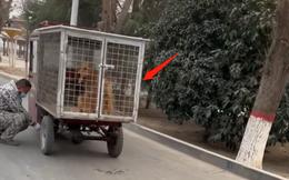 Giải cứu con chó đang bị đưa đến lò mổ, cảnh tượng xuất hiện hôm sau khiến người đàn ông mừng như bắt được vàng