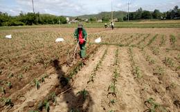 Ra đồng phòng trừ sâu keo mùa thu