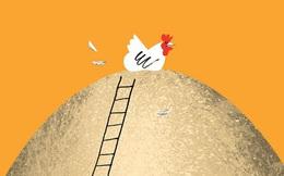 Đẻ trứng thì còn sống, không đẻ thì vào nồi: Giá trị thâm thúy học từ đàn gà mái khiến con người cũng phải tỉnh ra