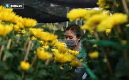 Giá sốc của cặp hoa cúc cao ngang đầu người