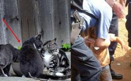 Đi đường thấy đàn mèo quanh rãnh nước, người phụ nữ đến gần phát hiện 1 đứa trẻ nhưng khó tin hơn là hành động của chúng với em bé