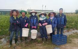 Vua Mít trong tâm dịch: 200 công nhân ở lại nông trại xuyên Tết, giám đốc xuống vườn trồng trọt