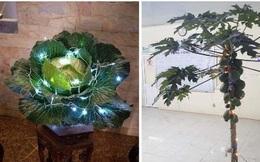 Không phải hoa đào, hoa mai, đây mới chính là những loại cây chưng ngày Tết đậm chất sinh viên Học viện Nông nghiệp