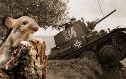 """""""Đội quân tí hon"""" khiến sư đoàn xe tăng của Hiler """"thất bại muối mặt"""""""