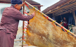 Cận cảnh quá trình thuộc da trâu, bò làm trống của những người thợ tài hoa