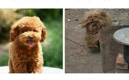Gửi chó cưng về quê cho bà nội nuôi, 1 tháng sau chủ nhân suýt ngất khi chứng kiến cảnh tượng này