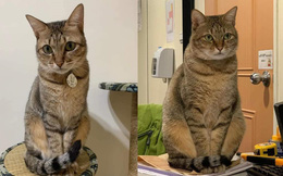 Gửi mèo cho bà ngoại nuôi, một tháng sau gặp lại, cô gái sững sờ ngay khi thấy bộ dạng của thú cưng