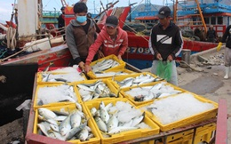"""Tàu thuyền đầy ắp """"lộc biển"""" nhộn nhịp cập cảng cá lớn nhất miền Trung ngày cận Tết"""