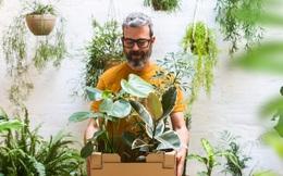 Cây xanh trong nhà KHÔNG lọc sạch không khí nhiều như bạn nghĩ: Tiến sĩ nói 1.000 cây xanh không bằng 'vũ khí' này!