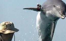 Động vật biển có thể giúp được gì cho con người trong lĩnh vực quân sự?