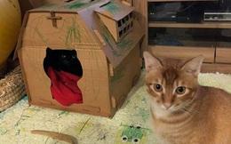 """Mất nửa ngày mới làm xong nhà mới cho mèo cưng, chủ nhân giận """"tím mặt"""" khi chứng kiến cảnh tượng này"""