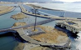 Thảm hoạ Nhật Bản: Cây thông thần kỳ 10 năm trước bây giờ ra sao?