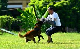 Chùm ảnh: Huấn luyện 'trợ thủ' chiến đấu của lực lượng 'quân hàm xanh'