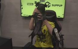 Đội LMHT mất 50% tiền thưởng vì khoe bộ phận nhạy cảm của cún cưng trên livestream