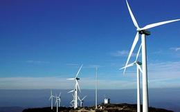 Vì sao tìm chủ mới 1 tháng, Ninh Thuận đã... hủy kế hoạch đấu thầu nhà máy điện gió 3.100 tỷ?