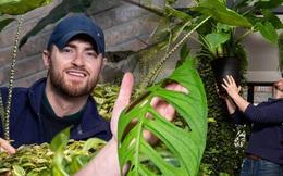 Chàng trai sở hữu cây đột biến với mỗi chiếc lá trị giá gần 400 triệu đồng
