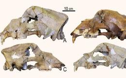 DNA 360.000 năm tuổi đã hé mở ánh sáng mới về lịch sử tiến hóa của gấu hang động