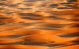 Bạn có biết sa mạc Sahara từng có cây cối xanh rờn với hươu cao cổ và cá sấu?