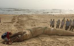 Quảng Nam: Phát hiện xác cá voi nặng 4 tấn tấp vào bờ biển