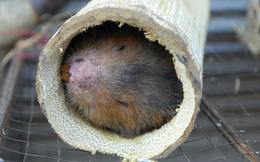 WHO: Trang trại động vật hoang dã ở Trung Quốc có thể là nguồn gốc gây đại dịch Covid-19
