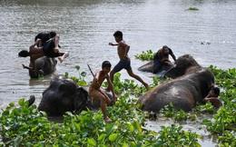 24h qua ảnh: Trẻ em chơi đùa trên lưng voi ở Thái Lan