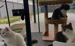 """Trùm ma túy mua 6 chú mèo con """"sang xịn mịn"""" để rửa tiền, đi tù không ai chăm nên dân tình tranh nhau xin nuôi hộ"""