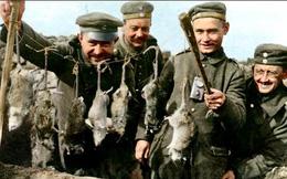 Kinh hoàng hàng triệu con chuột to như mèo khiến binh sĩ Thế chiến I khổ sở