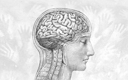 Bộ não con người đang ngày một nhỏ đi kể từ thời kỳ đồ đá