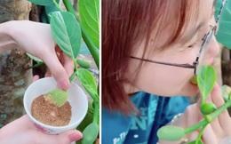 Cô gái 'xơi tái' quả mít non trên cây khiến dân mạng sửng sốt, còn không quên 'lêu lêu mấy bạn Sài Gòn vì không biết ăn món này'