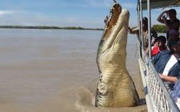 """Bắt được cá sấu dài hơn 4m, người dân tá hỏa phát hiện điều kinh hoàng trong bụng """"con quái thú"""""""