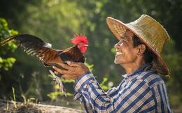 Sự tích tên gọi 'gà Mạnh Hoạch': Từ ông chủ quán trà đá đến chuỗi nhà hàng thương hiệu quốc dân hơn 20 năm tuổi tại Hải Dương