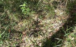 Chuyên gia đố xem ai tìm được con rắn trong bức ảnh, dân mạng vò đầu bứt tai nhìn không ra