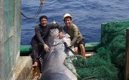 CLIP: Ngư dân hợp lực đưa con cá cờ nặng hàng tạ lên bờ, thương lái trả ngay 40 triệu đồng