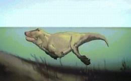 """Cá voi trông như thế nào trước khi trở thành """"cá""""?"""