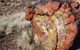 Gỗ hóa thạch là gì, có ý nghĩa phong thủy ra sao mà được giới đại gia 'săn lùng'?