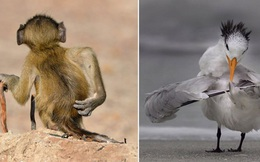Những khoảnh khắc siêu hài hước của thế giới động vật