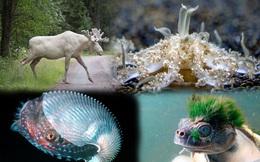 1001 thắc mắc: Những loài động vật nào 'hiếm có, khó tìm' trên Trái Đất?
