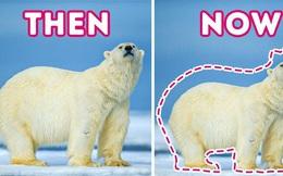 Các loài vật trên Trái đất đang ngày càng bé lại, nhưng đố bạn biết lý do vì sao!