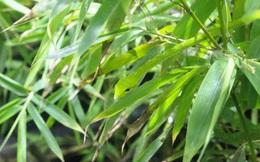 Thách thức thị giác 10 giây: Bạn có nhìn thấy con rắn ẩn nấp trong bụi cây?