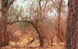 Thách thức thị giác 10 giây: Hươu cao cổ to lớn lắm nhưng bạn có nhìn thấy nó trong bức ảnh này?
