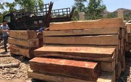 Lợi dụng kiểm lâm, nhân viên quản lý bị cách ly, lâm tặc tràn vào tàn sát rừng