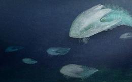 Phát hiện loài quái vật 'khổng lồ' hơn 500 triệu năm tuổi có thân hình giống như một con tàu vũ trụ