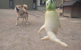 Thử thách nhịn cười với các loại rau củ có hình dáng kì lạ, tưởng photoshop song đều là hàng thật