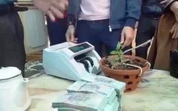 Xôn xao cây lan được chuyển nhượng với giá hơn 1,6 tỷ đồng tại Nghệ An